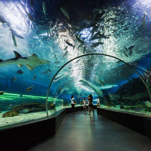 manila-oceanarium