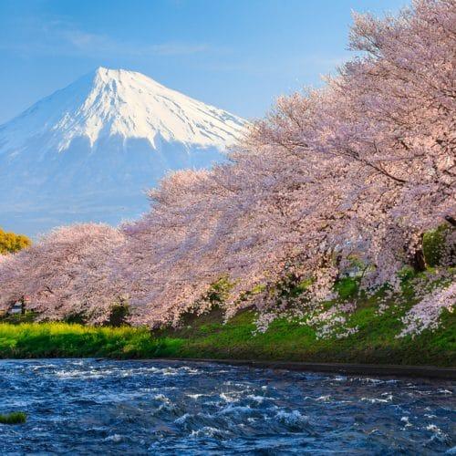 tokyo-sakura